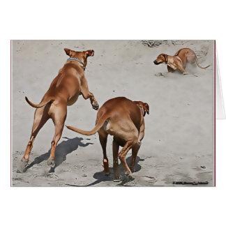 Ridgebacks' Fun at the Beach Greeting Cards