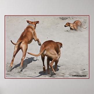 Ridgebacks' Fun at the Beach - Customized Poster