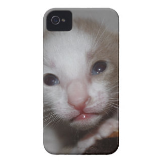 Ridiculously cute baby kitten iPhone 4 Case-Mate cases