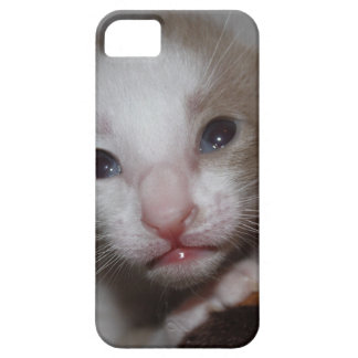 Ridiculously cute baby kitten iPhone 5 covers