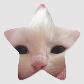 Ridiculously Cute White Kitten in a pink blanket. Star Sticker