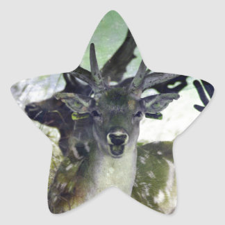 Ridiculously Photogenic Deer Star Sticker