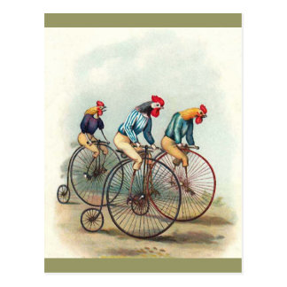 Riding Roosters Post Card