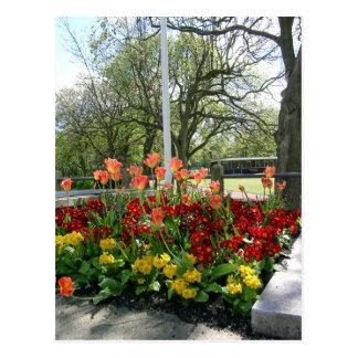 Ridley Park Blyth Northumberland Postcard