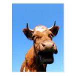 Riendo vaca postal