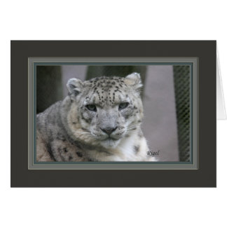 Rigel the Snow leopard_2685 Card