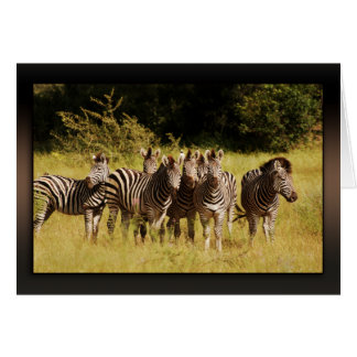 Right at You - zebras safari wildlife Card
