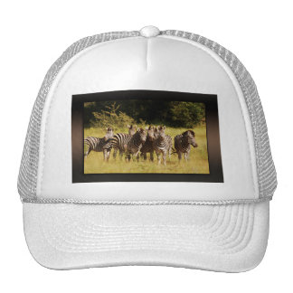 Right at You - zebras safari wildlife Trucker Hat