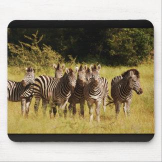 Right at You - zebras safari wildlife Mouse Pad