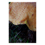 Right Shade Mushroom Posters