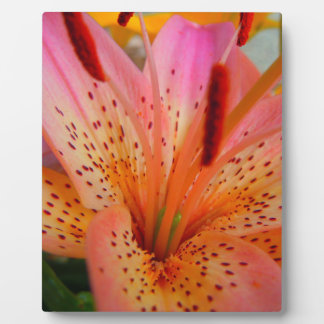 Right Tilt Pink Lily Plaque