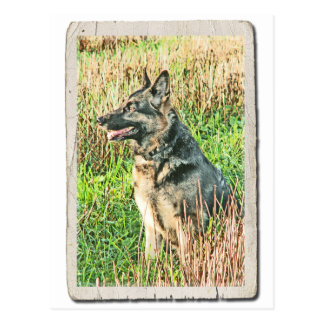 Rin Tin Tin tribute postcard