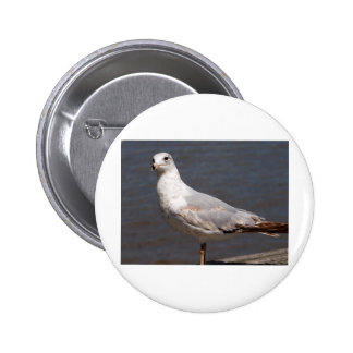 Ring Billed Gull Pinback Buttons