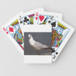 Ring Billed Gull Deck Of Cards