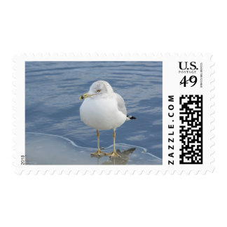 Ring-billed gull first class postage