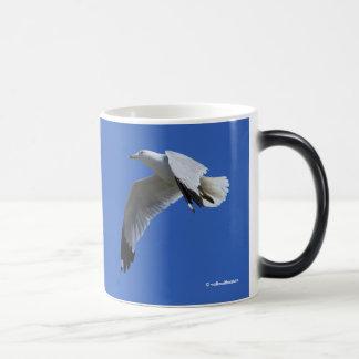 Ring-Billed Gull in Flight 11 Oz Magic Heat Color-Changing Coffee Mug