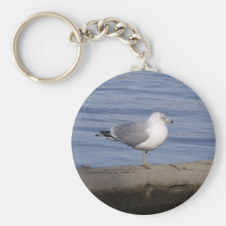 Ring Billed Gull Keychain