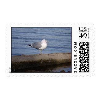 Ring Billed Gull Postage