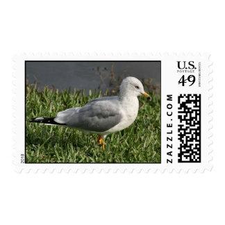 Ring Billed Gull Postage Stamp
