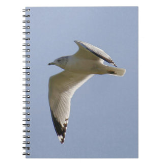 Ring Billed Gull Spiral Photo Notebook
