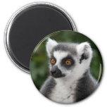 Ring Lemur Magnet