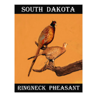 Ring-neck Pheasant Letterhead