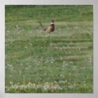 Ring Neck Pheasant Print