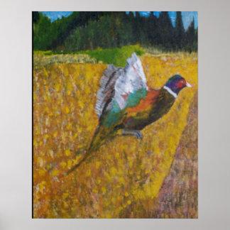 Ring Neck Pheasant Poster