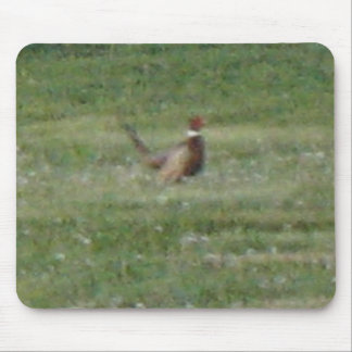 Ring Neck Pheasants Mouse Pad