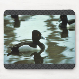 Ring-necked Duck Mouse Pad