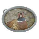 Ring Necked Pheasant Belt Buckle