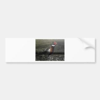Ring-Necked Pheasant Bird Bumper Sticker