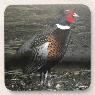 Ring-Necked Pheasant Bird Coaster