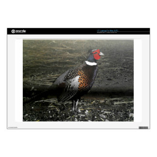 """Ring-Necked Pheasant Bird Decals For 17"""" Laptops"""