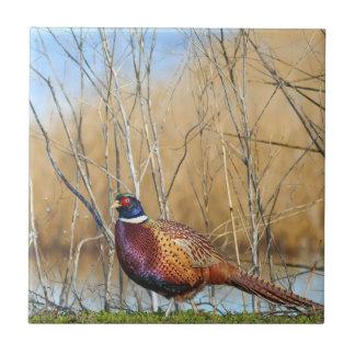 Ring-necked Pheasant Coaster Ceramic Tile