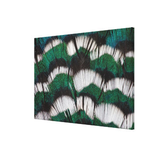 Ring-Necked Pheasant Feathers Canvas Print