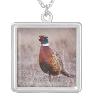 Ring-necked Pheasant Phasianus colchicus) Silver Plated Necklace