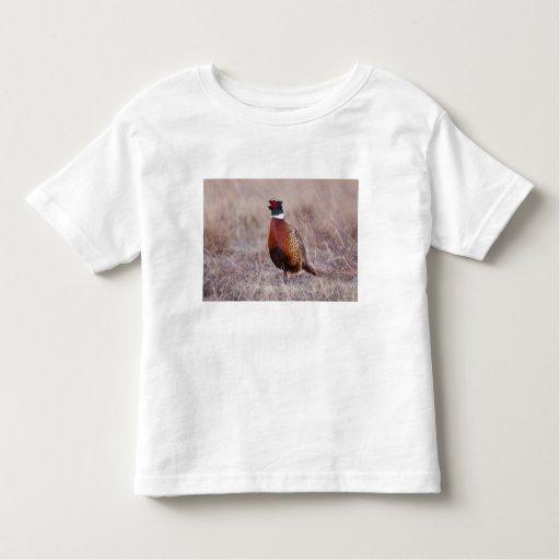 Ring-necked Pheasant Phasianus colchicus) Tee Shirts