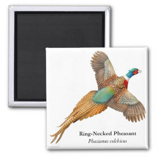 Ring Necked Pheasant Square Magnet
