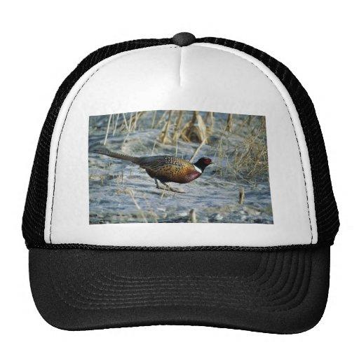 Ring-necked pheasant trucker hat