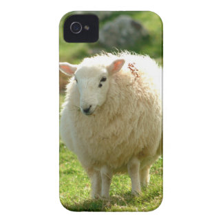 Ring of Kerry Sheep iPhone 4 Case-Mate Case