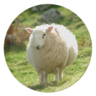 Ring of Kerry Sheep Plates