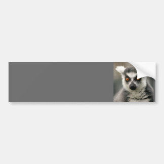 ring tail lemur bumper sticker