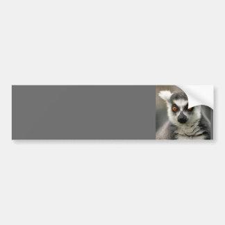ring tail lemur car bumper sticker