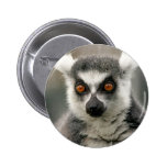 ring tail lemur pinback button