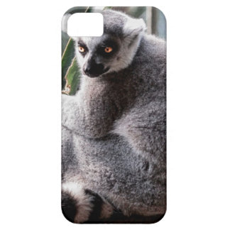 Ring Tail Lemur Wildlife Animal Photo iPhone 5 Case