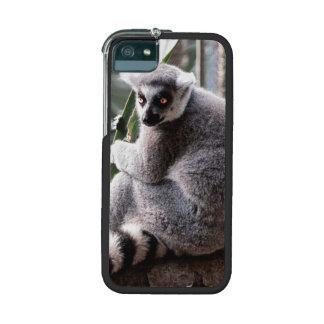 Ring Tail Lemur Wildlife Animal Photo iPhone 5/5S Covers