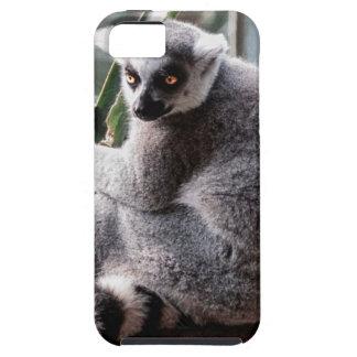 Ring Tail Lemur Wildlife Animal Photo iPhone 5 Covers