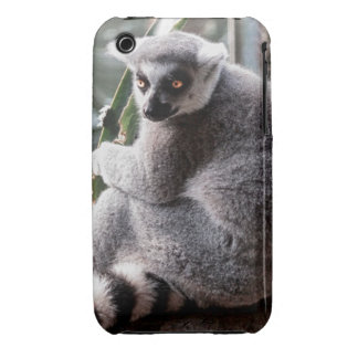 Ring Tail Lemur Wildlife Animal Photo Case-Mate iPhone 3 Case