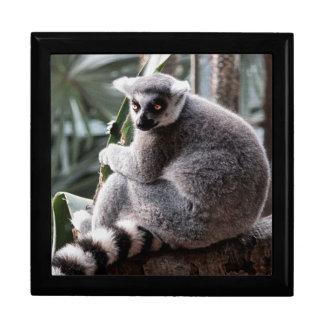Ring Tail Lemur Wildlife Animal Photo Jewelry Box